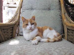 Photo_HouseofMercy/Cat